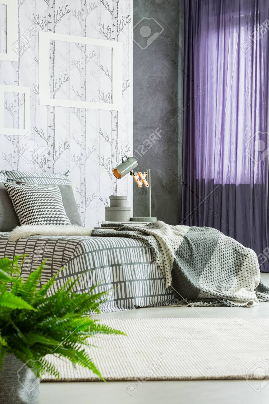 Purple Drapes And Fern In Modern Bedroom Interior With Gray And Stock Photo Picture And Royalty Free Image Image 88438031