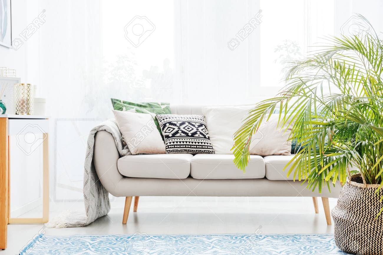 Plant Next To Beige Sofa With Bright Cushions In Living Room.. Stock ...