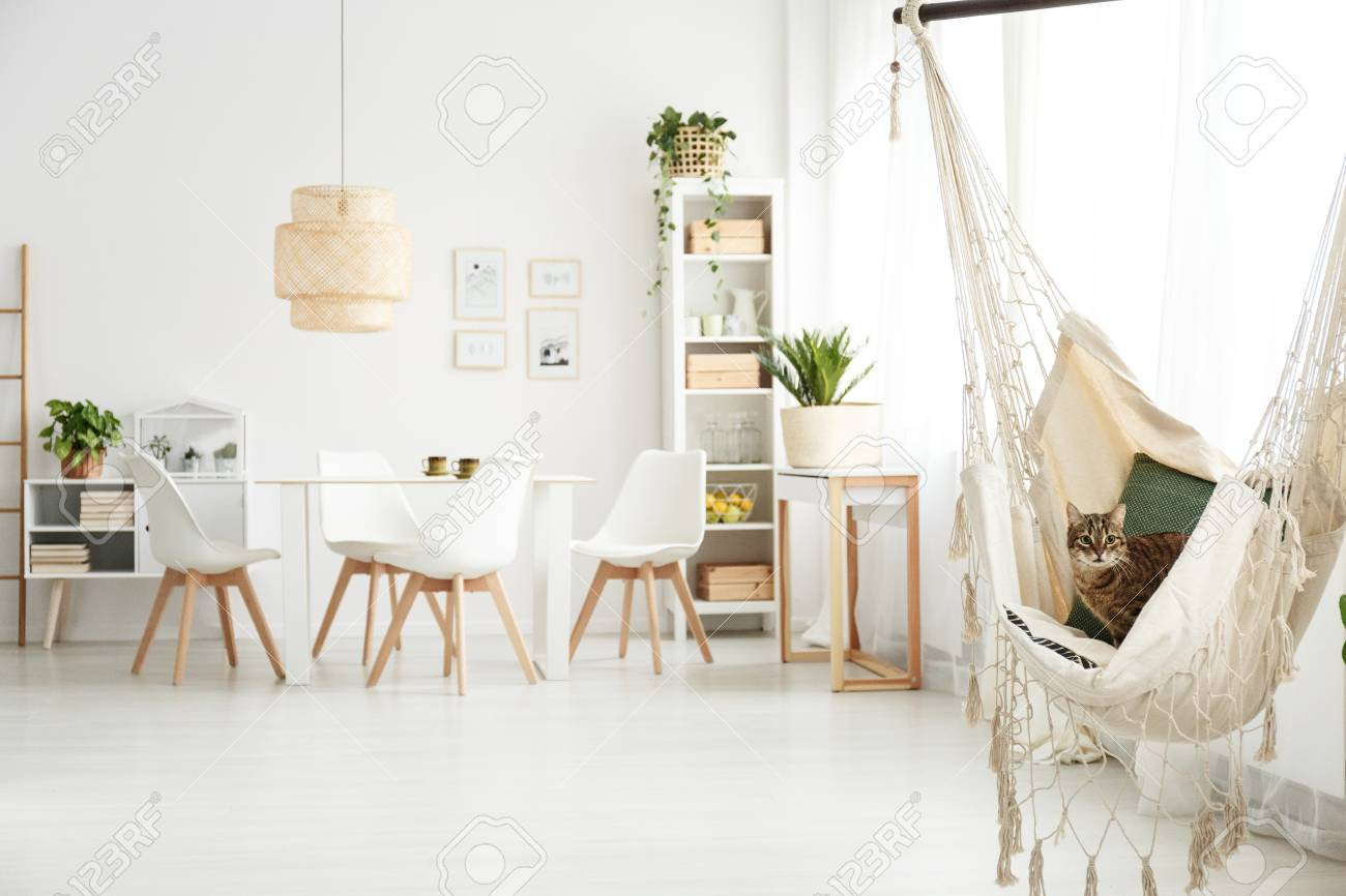 White Dining Room Interior With Table, Chairs, Lamp And Cat Sitting ...