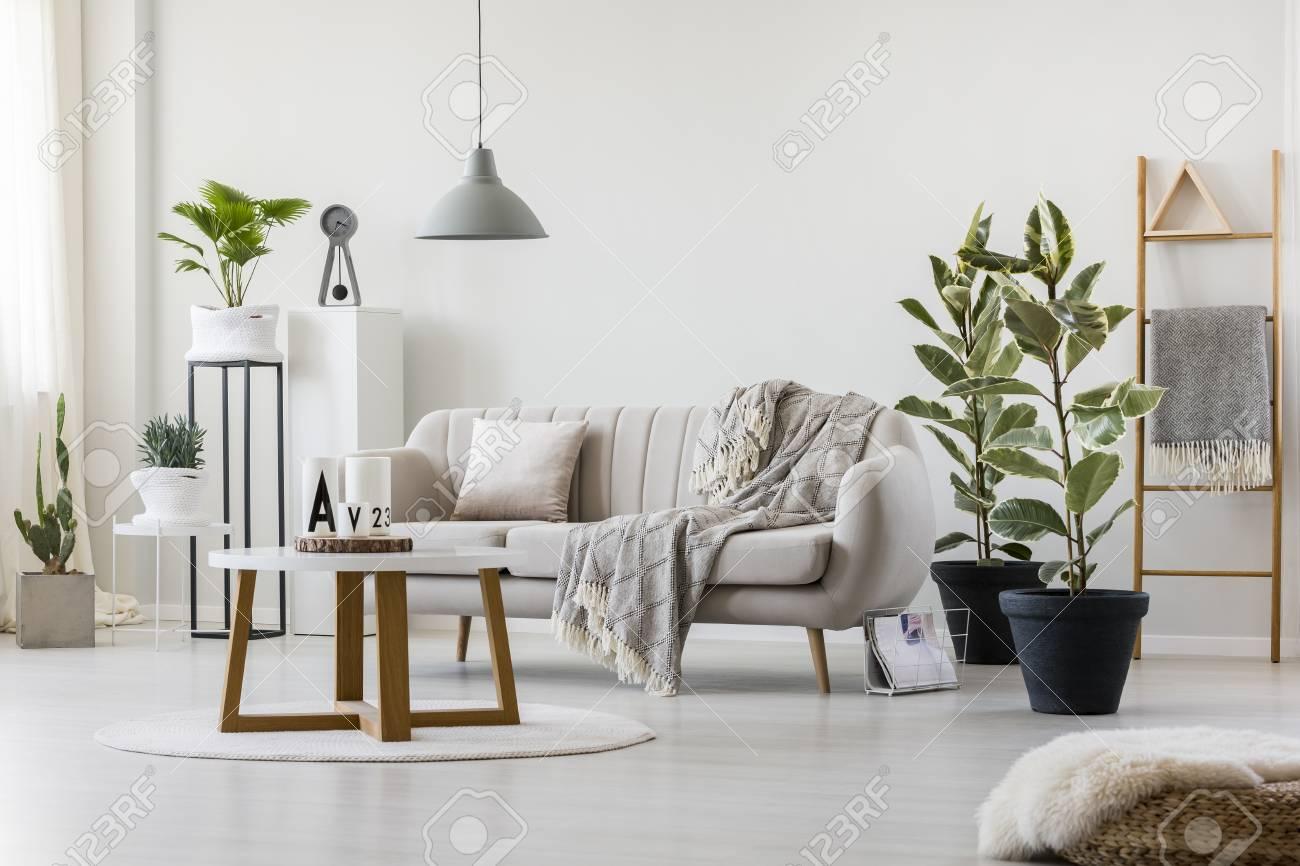 Bright Living Room Interior With Elegant Beige Couch Ficus
