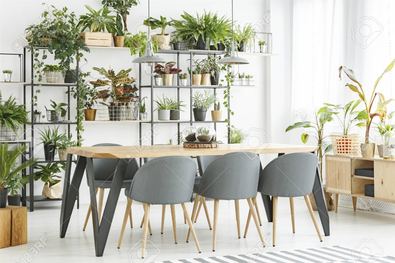 Grey chairs at wooden table in natural dining room interior with..