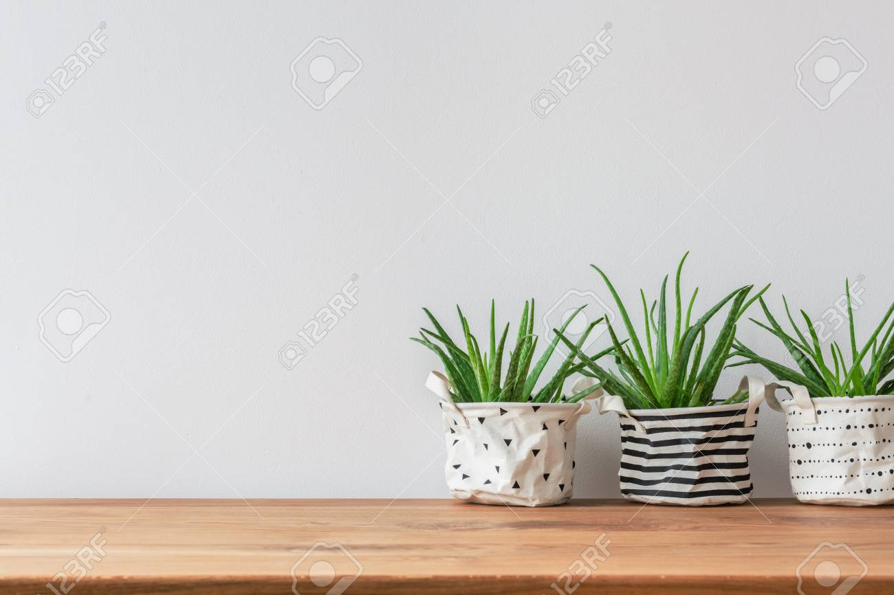Three plants in fabric pot covers standing against white, empty wall - 101304469
