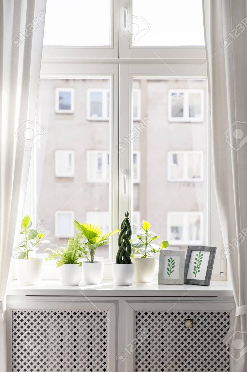 Bord De Fenetre Interieur plantes et dessins encadrées sur rebord de fenêtre dans le cadre de l & #  39 ; intérieur de luxe. photo réelle