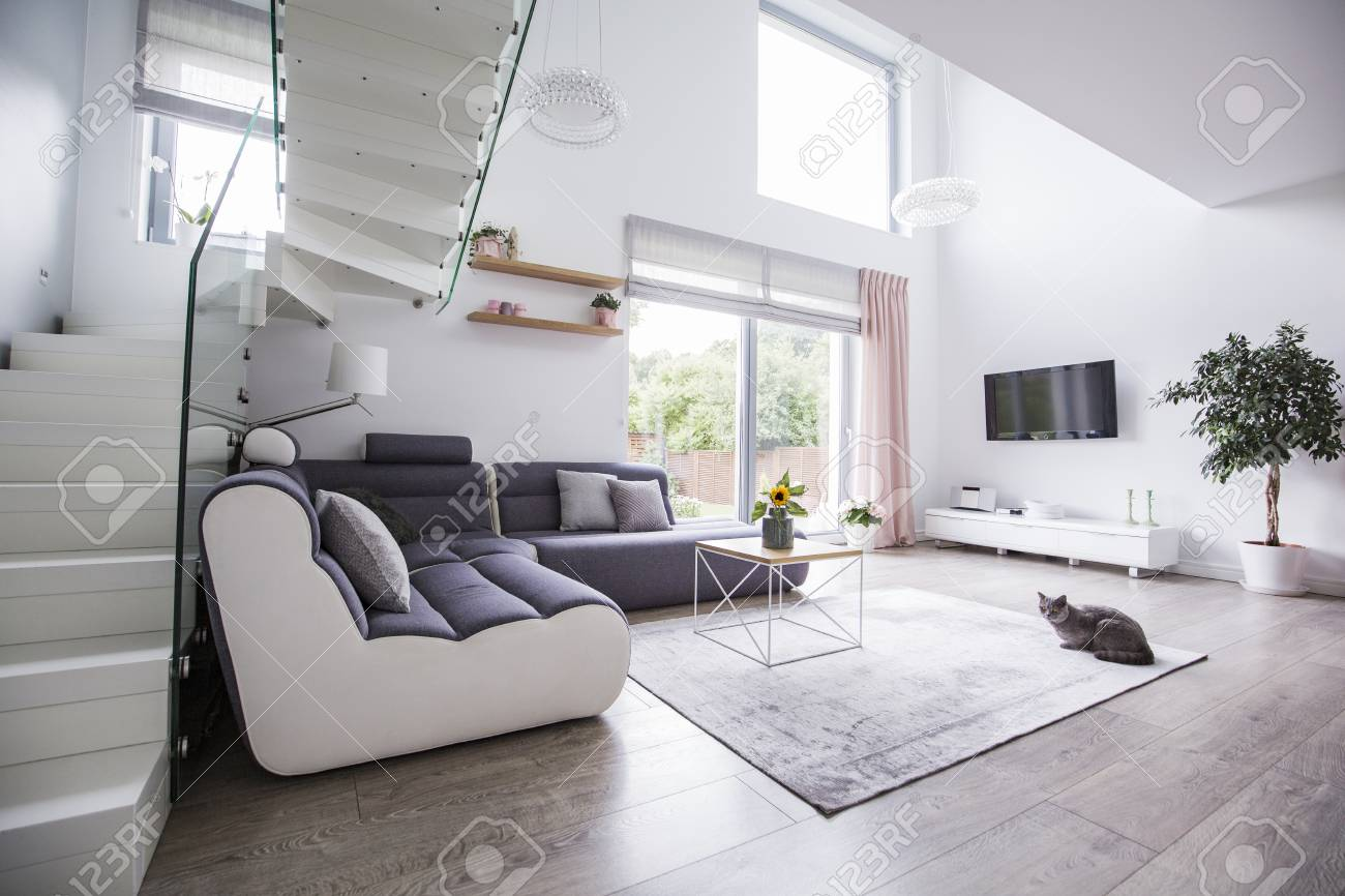 Cat in a modern living room interior with a corner sofa, stairs,..