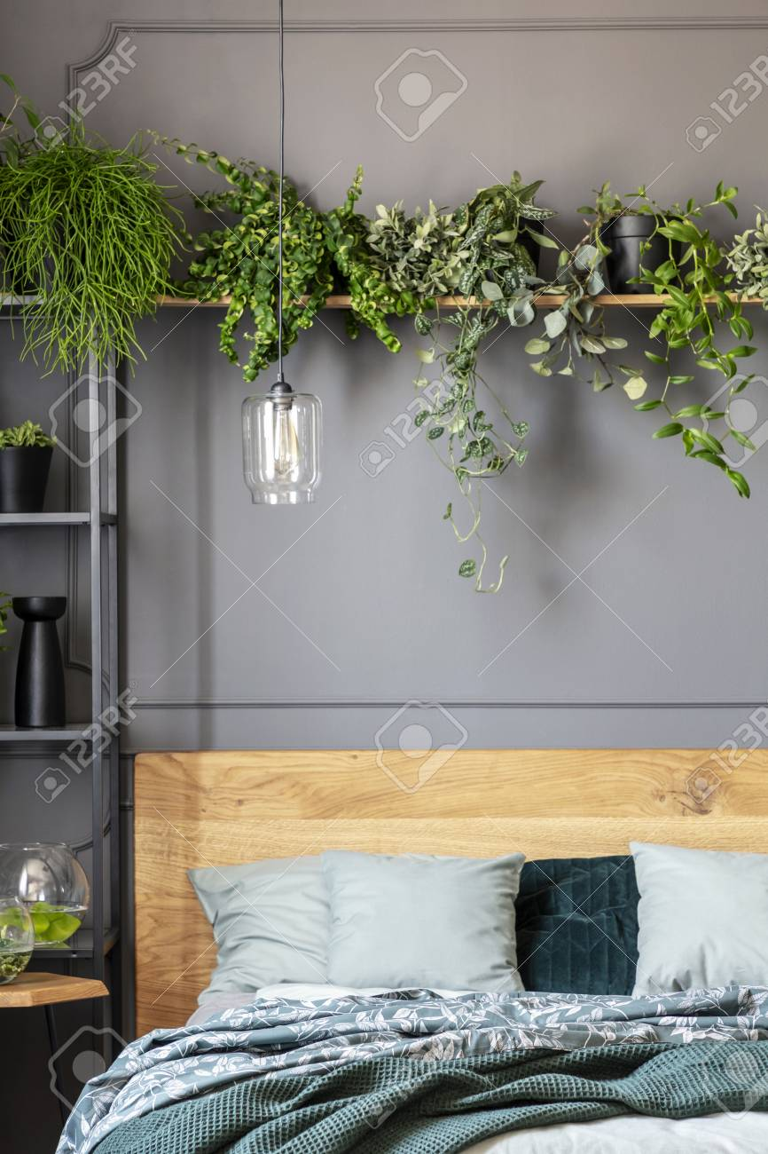 Close Up Of Plants On A Shelf Above The Bed With Pillows And Stock Photo Picture And Royalty Free Image Image 108184095