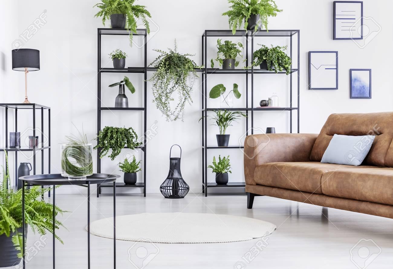Spacious white living room with urban jungle on black metal shelf..