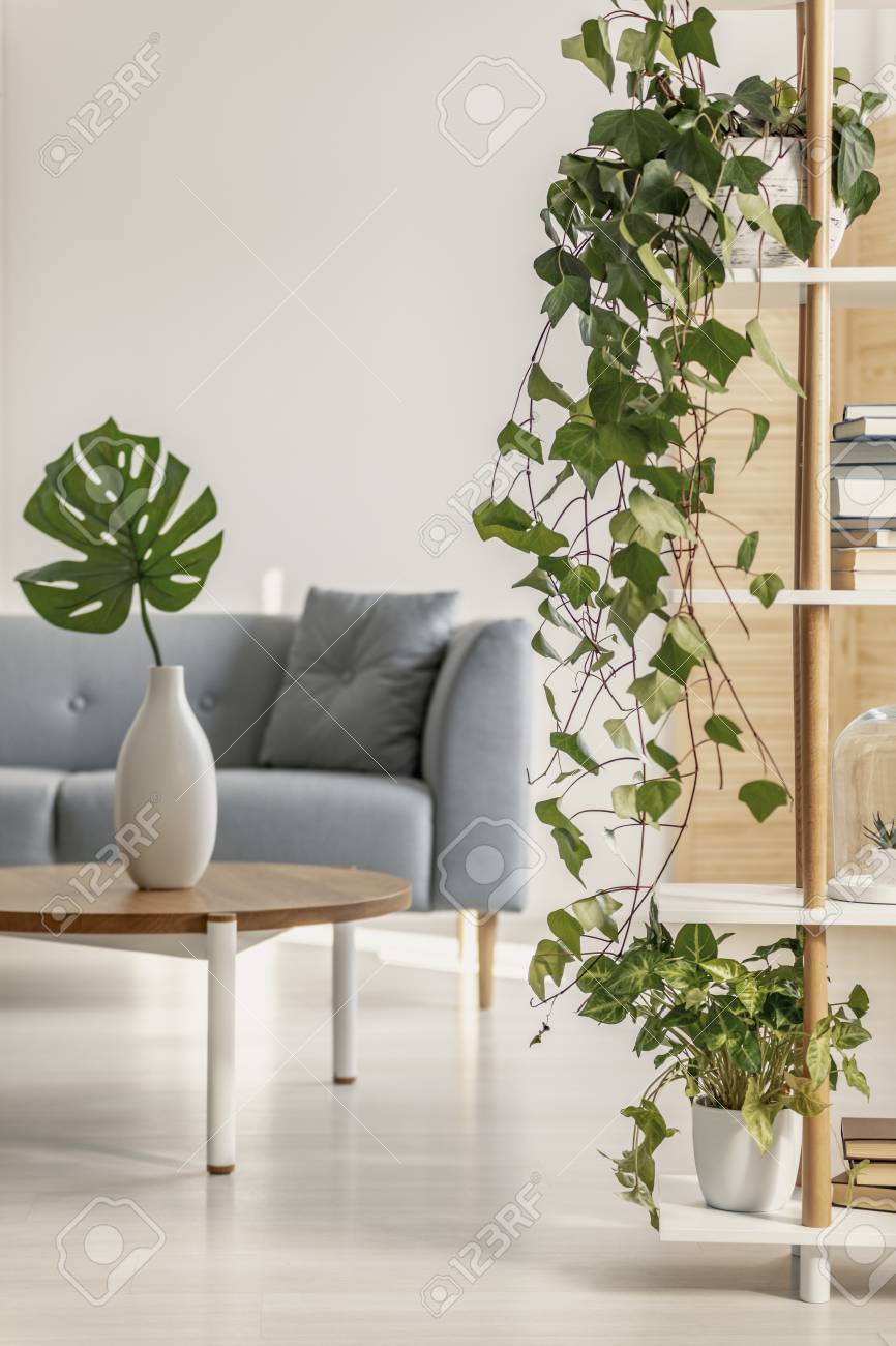 urban jungle in natural living room with grey scandinavian couch rh 123rf com
