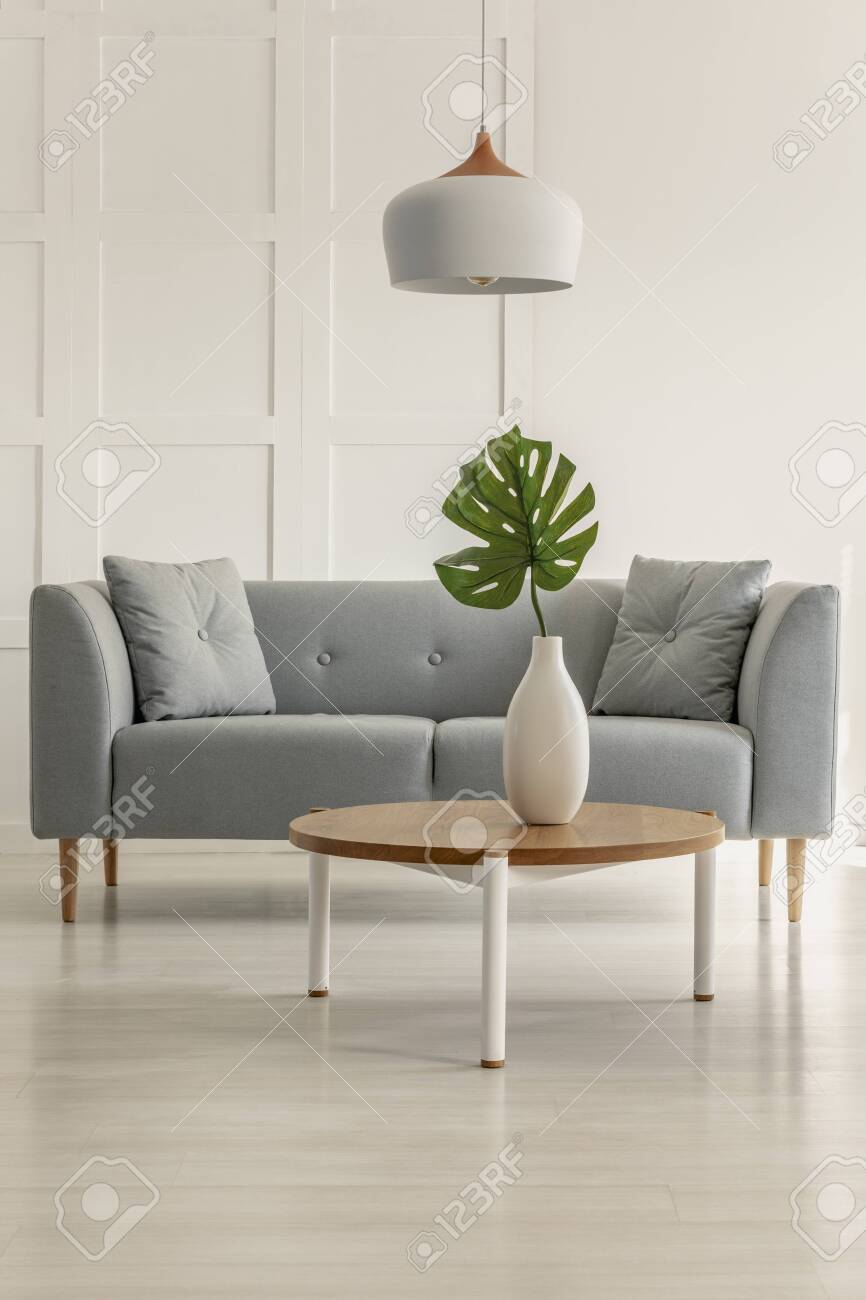 Real photo of a grey sofa and coffee table with a monstera deliciosa in a living room interior - 120077109