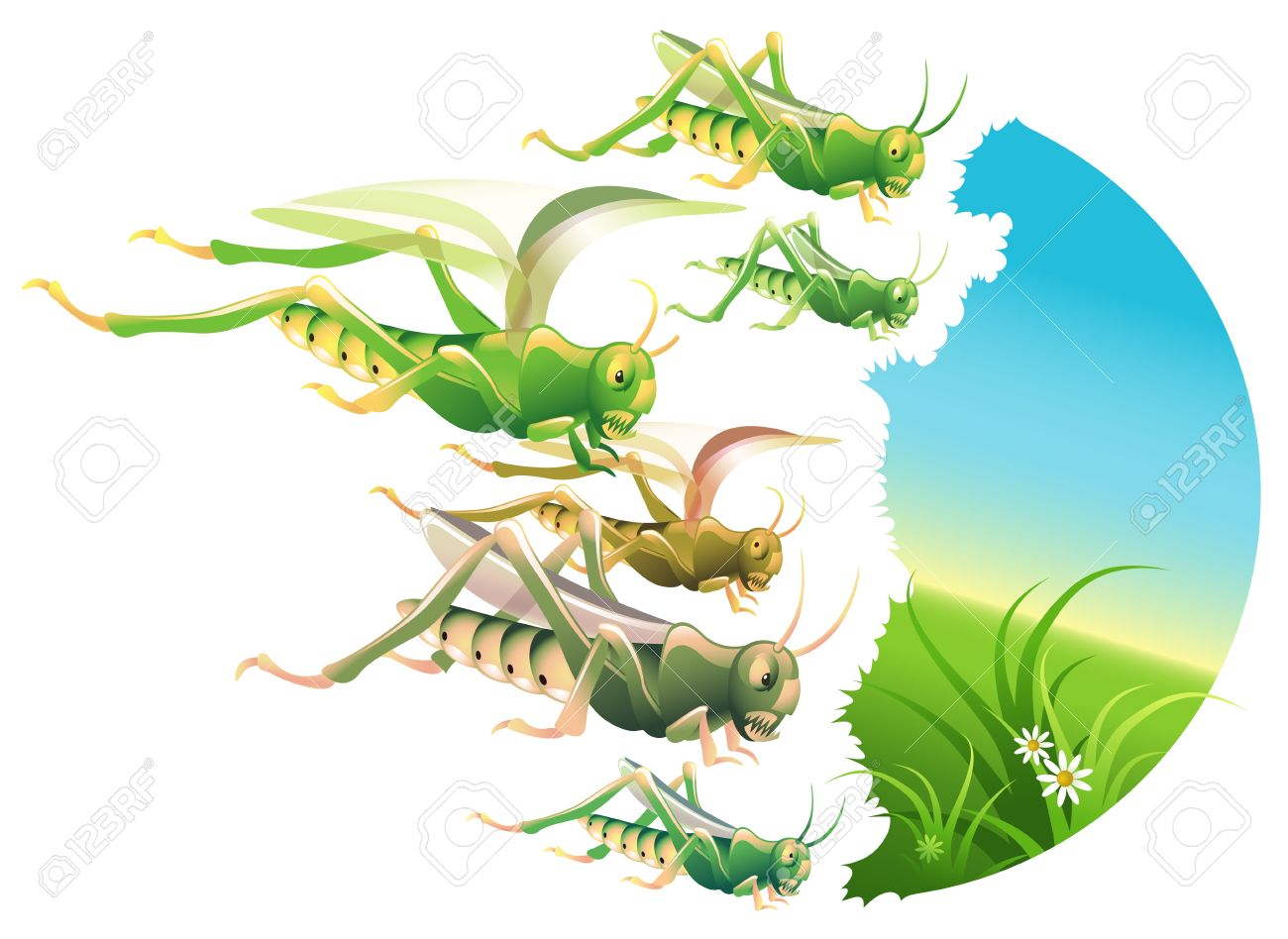 Locust swarm eating everything in their path Stock Vector - 11133161