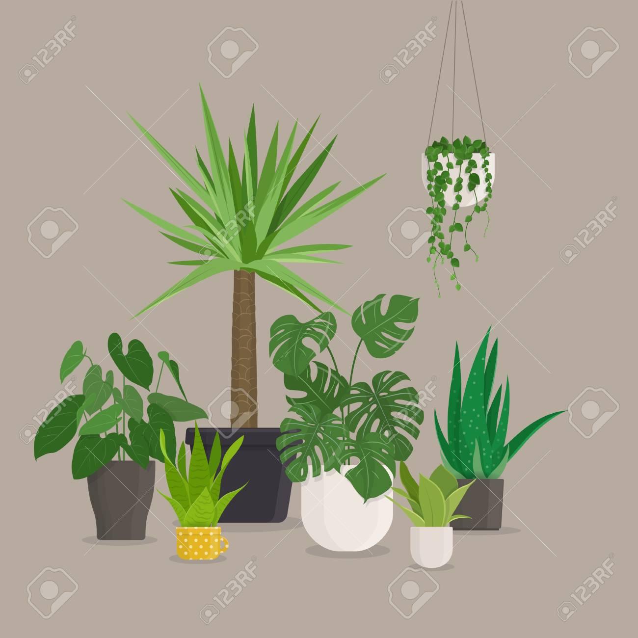 Set Of Green Indoor House Plants In Pots. Vector Illustration Stock Vector    94688624