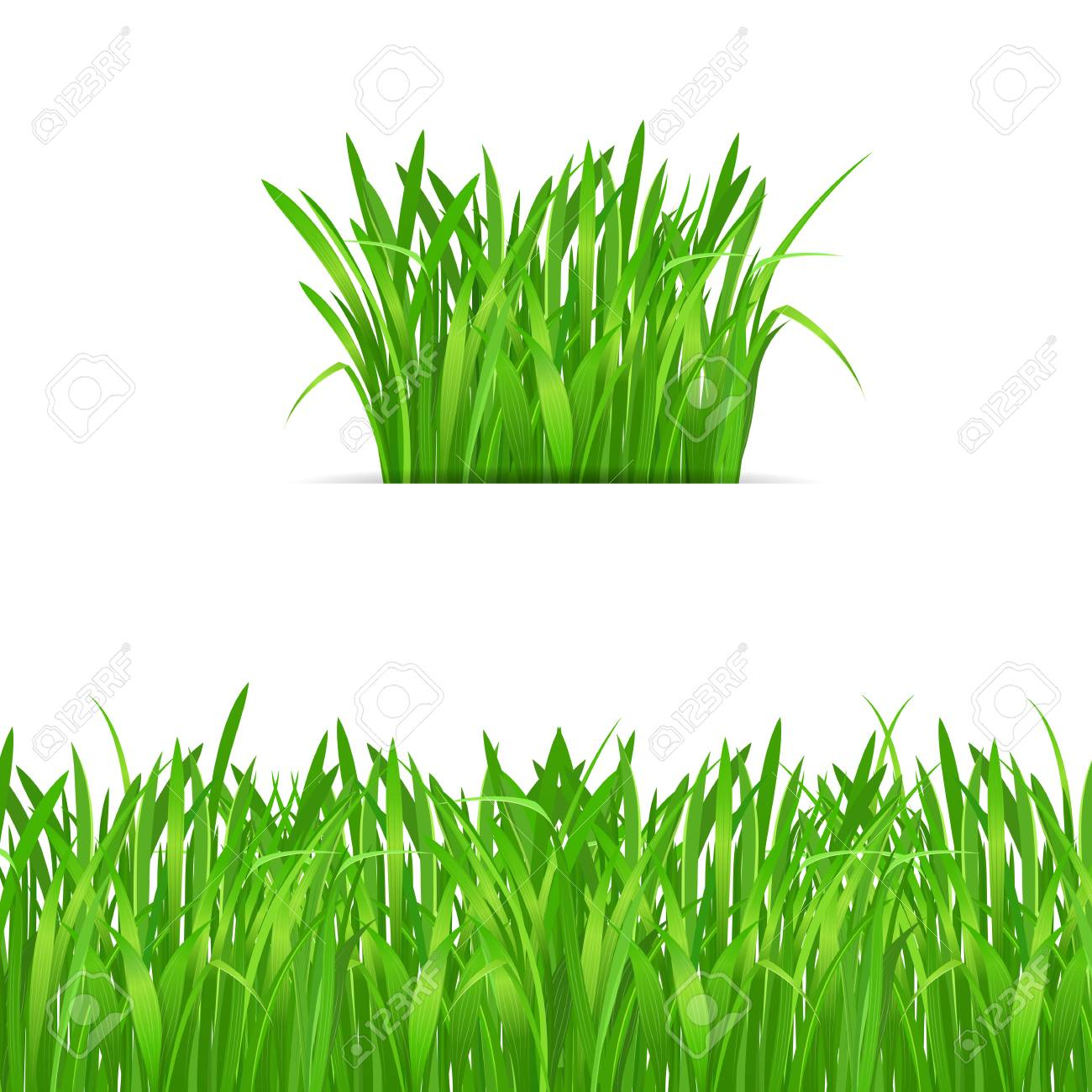 green grass tuft and border on white background nature design