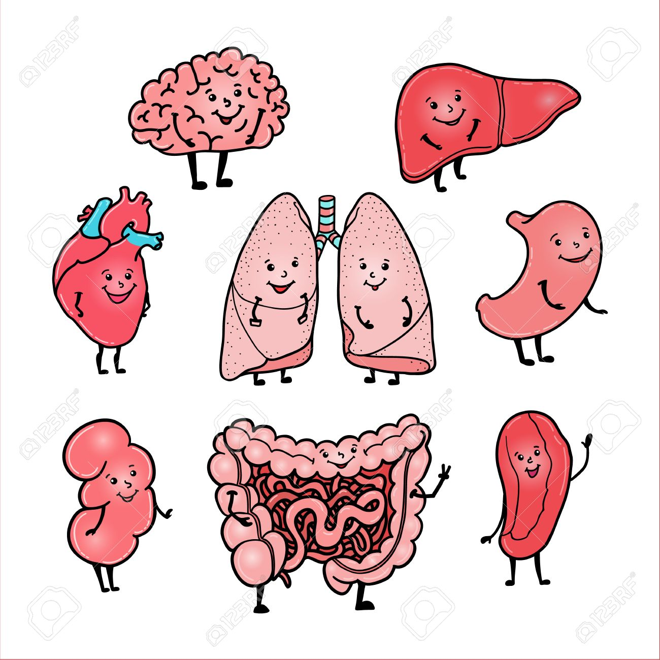 Set Of Cute And Funny Human Organs - Brain, Heart, Liver, Kidney ...