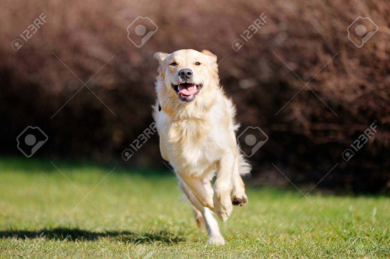 dog running images u0026 stock pictures royalty free dog running