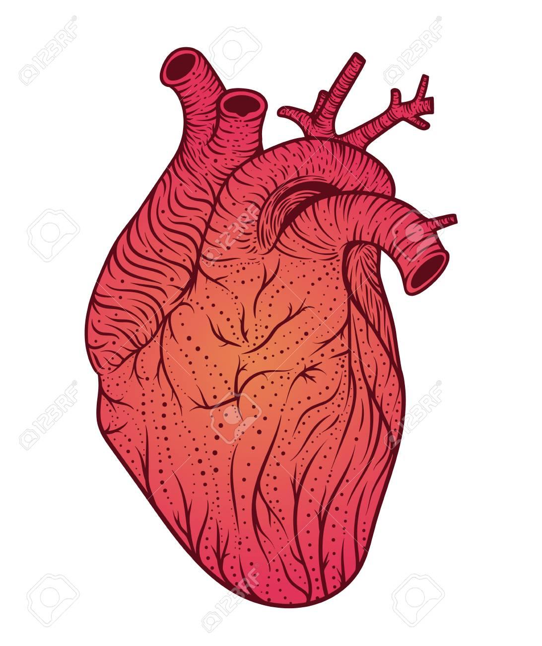 Human Heart Line Art. Vector Illustration. Tattoo Style. Vintage ...