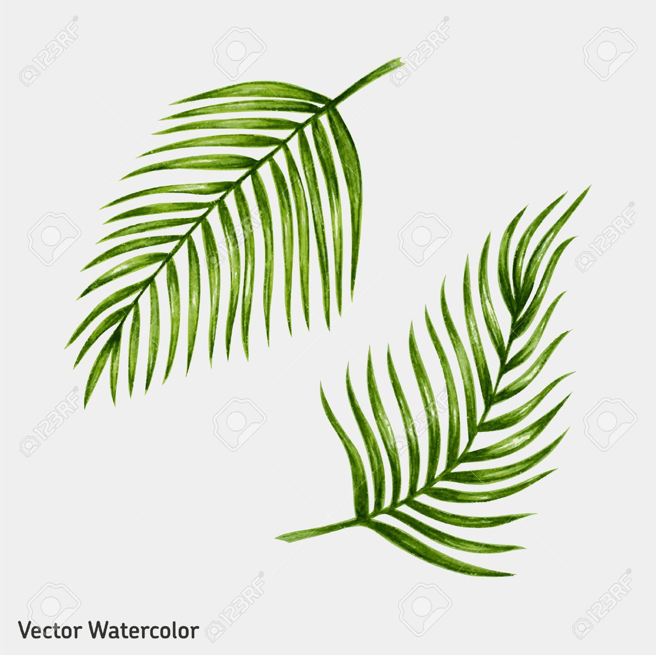 Watercolor tropical palm leaves. Vector illustration. - 43273978