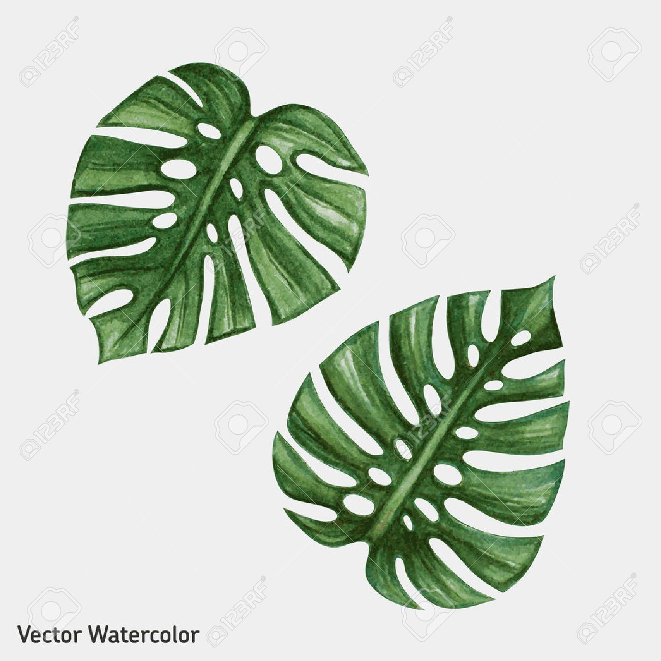 Watercolor tropical palm leaves. Vector illustration. - 45007989