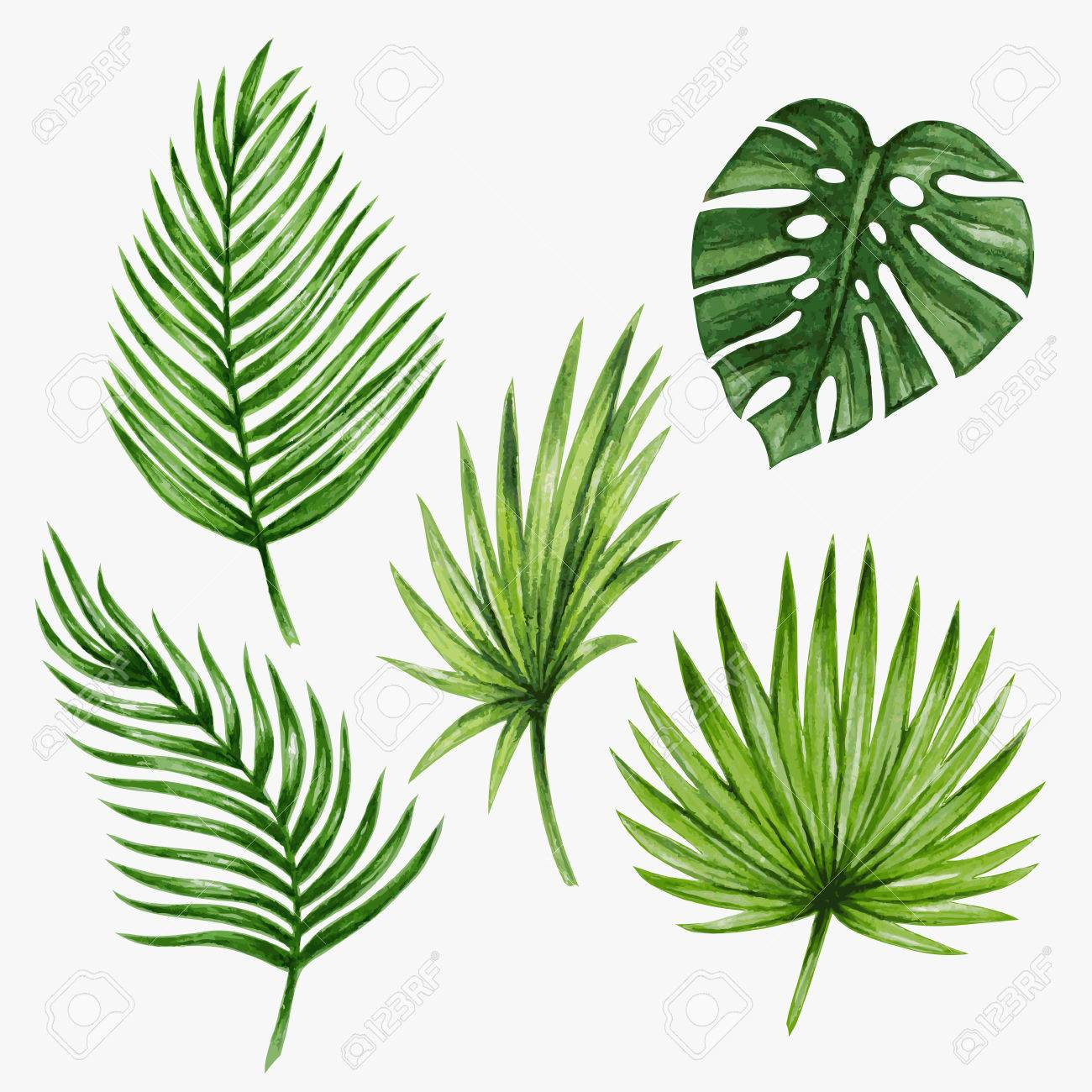 Watercolor tropical palm leaves. Vector illustration. - 62670190