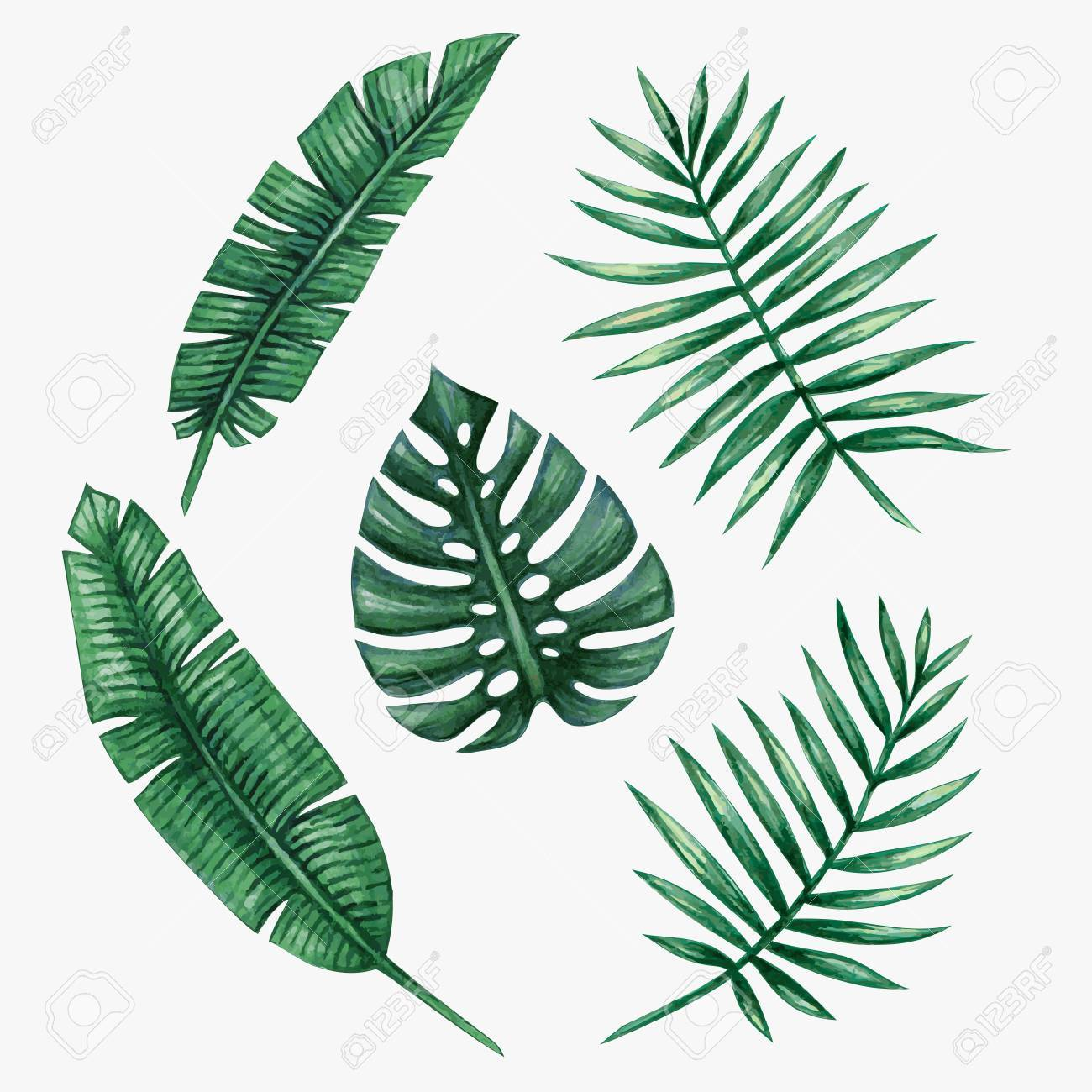 watercolor tropical palm leaves vector illustration royalty free rh 123rf com palm leaf vector free palm leaf vector file