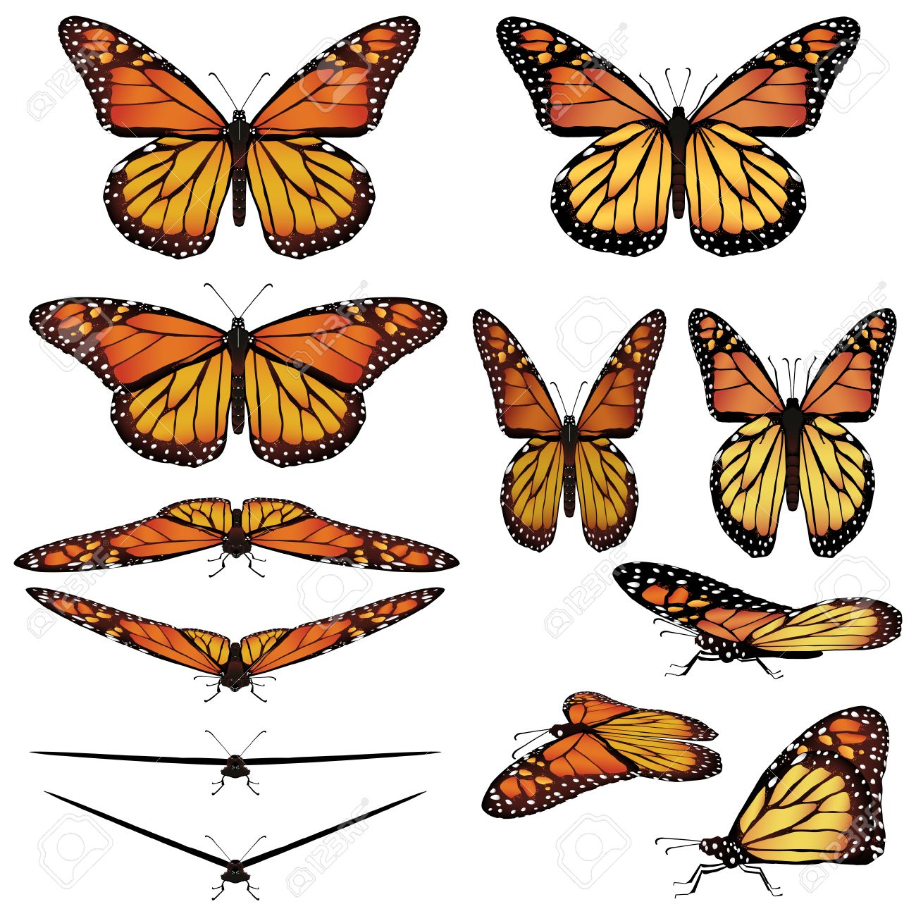 monarch butterfly in different poses royalty free cliparts