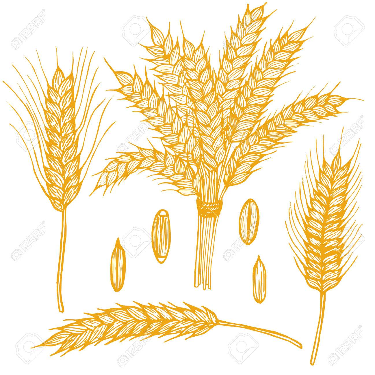 Wheat Ears Hand Draw Sketch. - 61330860