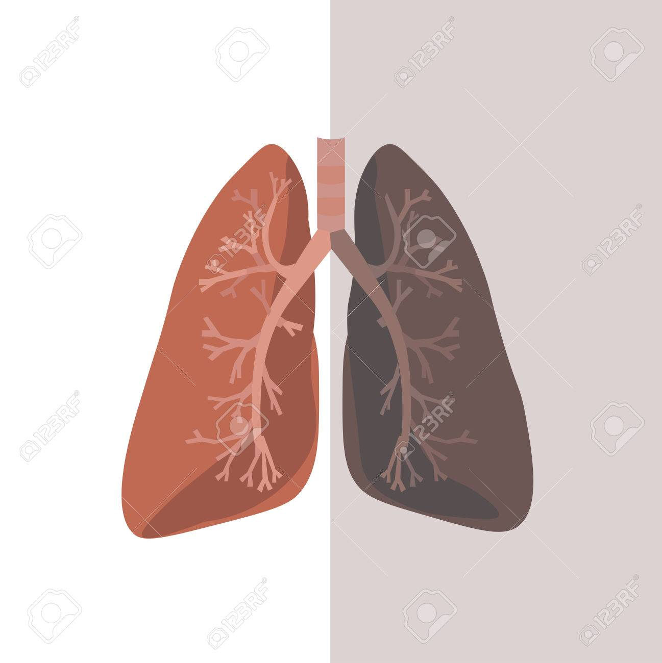 Human Lung Anatomy. Flat Design. Royalty Free Cliparts, Vectors, And ...