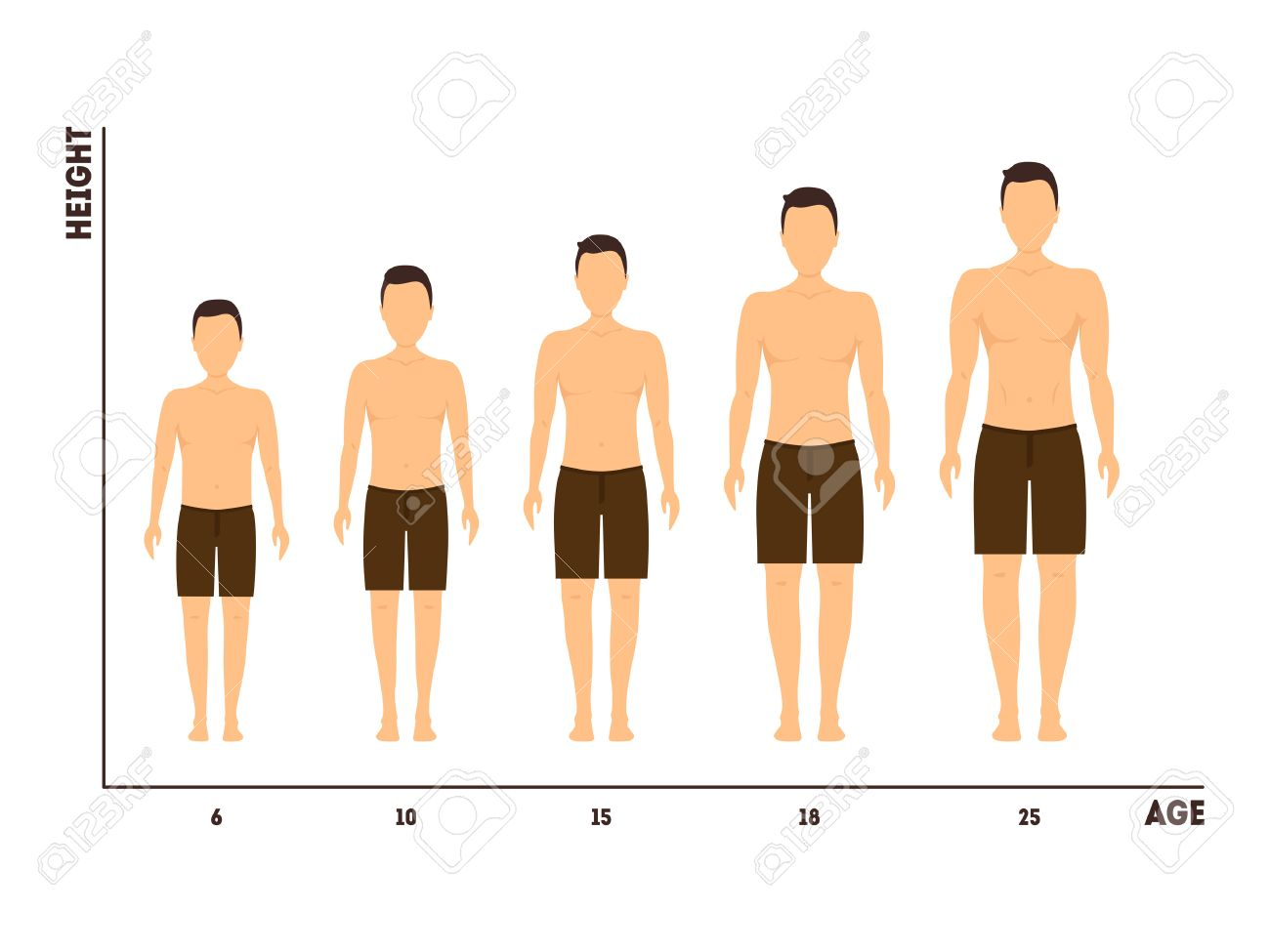 Height and Age Measurement of Growth from Boy to Man. Vector - 73355327