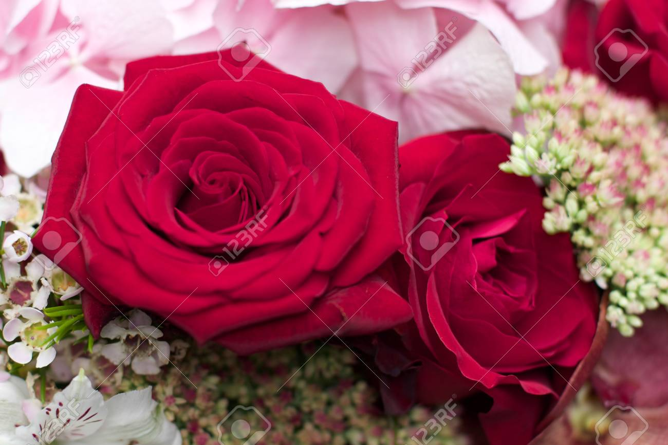 Red Rose And Hydrangea Bouquet Flower For A Celebration Stock Photo Picture And Royalty Free Image Image 31365069