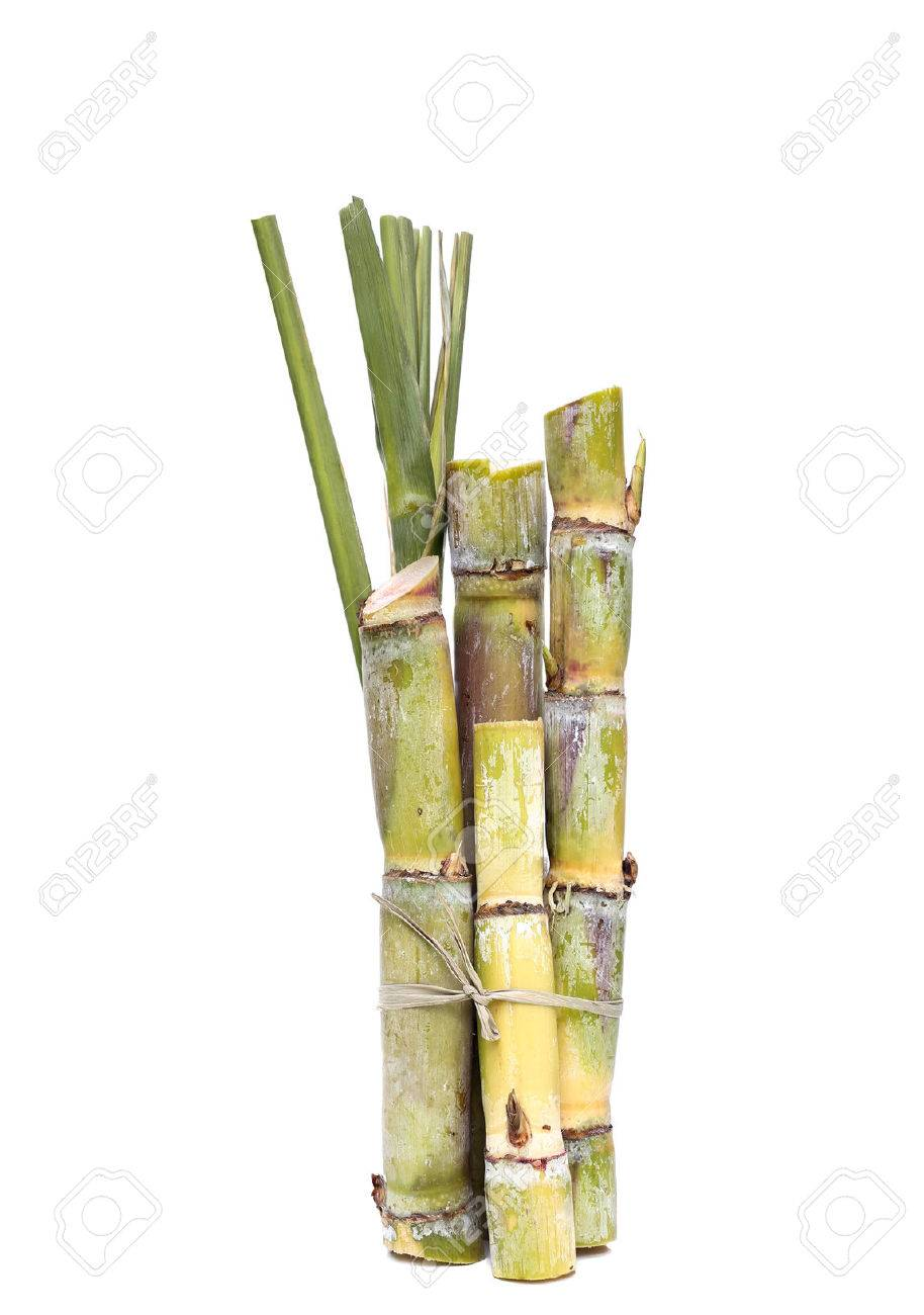 cane sugar images u0026 stock pictures royalty free cane sugar photos