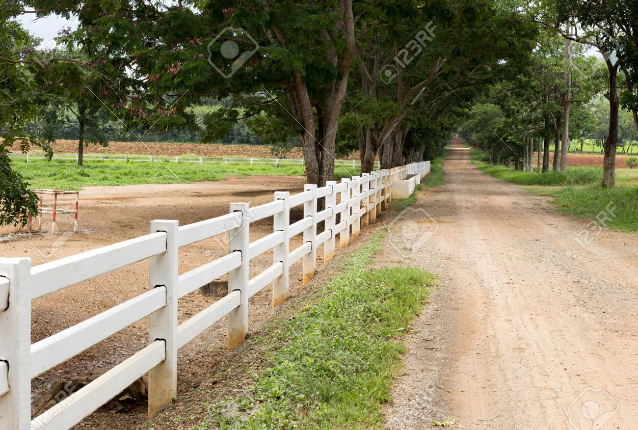 Cloture En Bois Blanc white wooden fence and long countryside road with tree