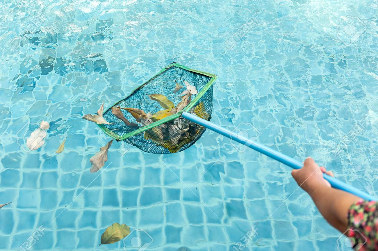 Cleaning swimming pool of fall leaves with cleaning net in the..