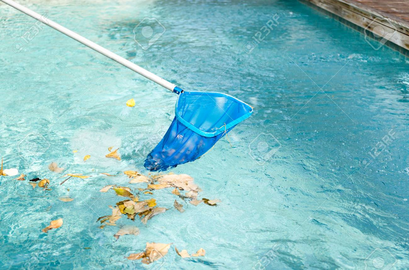 Cleaning swimming pool of fallen leaves with blue skimmer in..