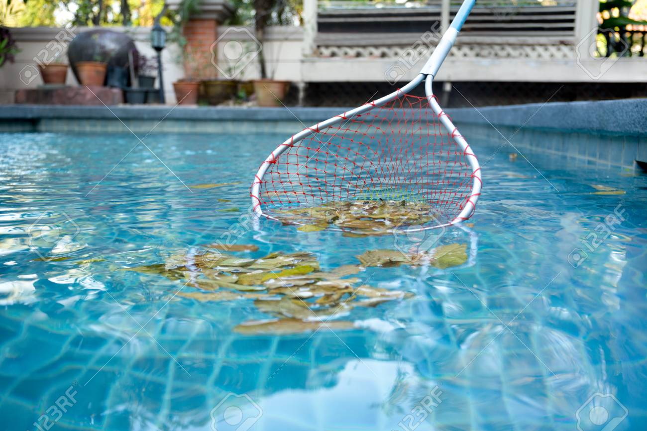 Cleaning swimming pool of fallen leaves with net in summer