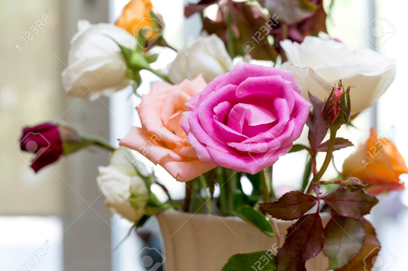 Beautiful Pink Flowers In White Vase In Sunlight Stock Photo