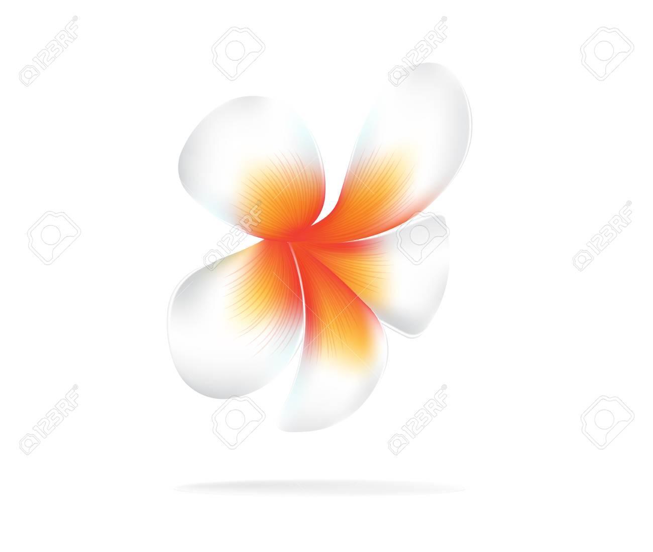 Illustration Vector Of Hawaii Flower Frangipani White Plumeria