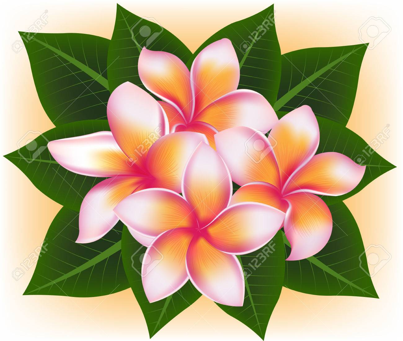 Illustration vector of hawaii flower frangipani plumeria rubra illustration vector of hawaii flower frangipani plumeria rubra and green leaves stock vector 44517177 izmirmasajfo