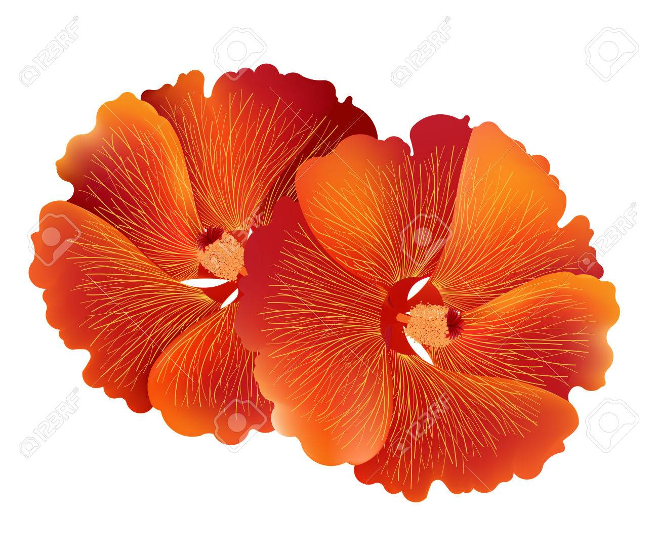 Illustration Vector Of Red Hibiscus Flower Or Common Name Is