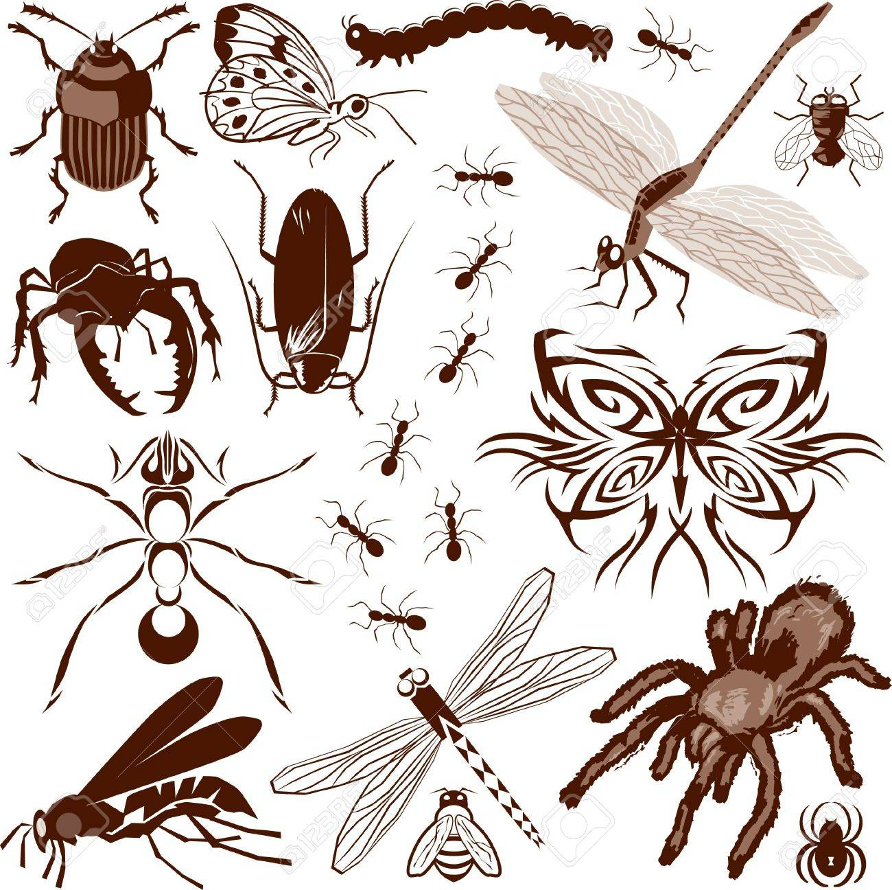 Insect Collection Stock Vector - 13453607
