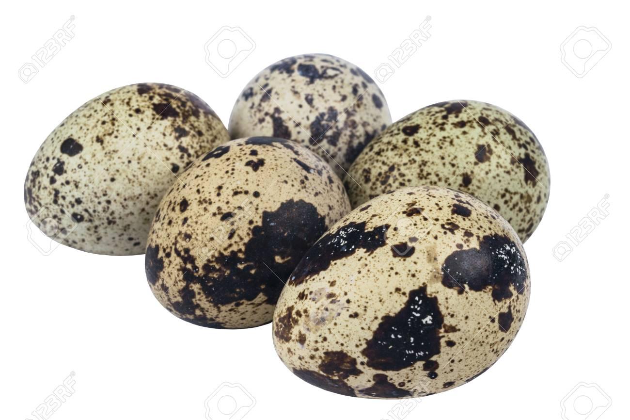 Resultado de imagen de huevos de codorniz