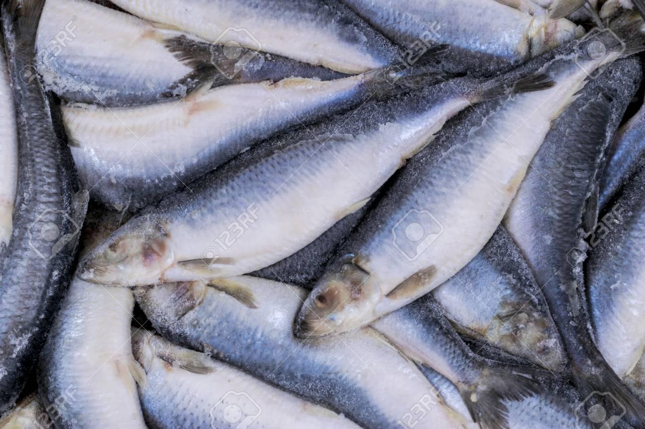 Frozen Herring Frozen Group Of Fish Iced Atlantic Fish Herrings