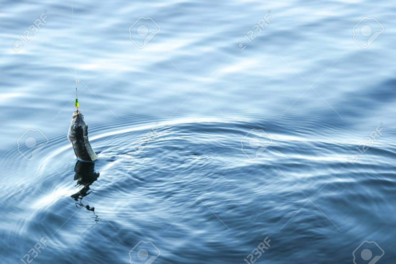 successful bait