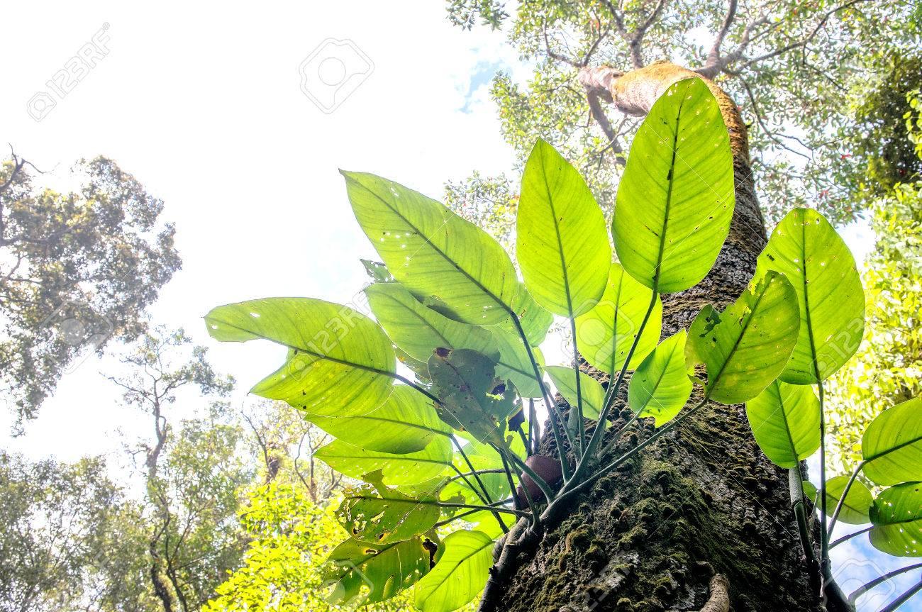 Parasite plant growing the big tree Stock Photo - 25651780