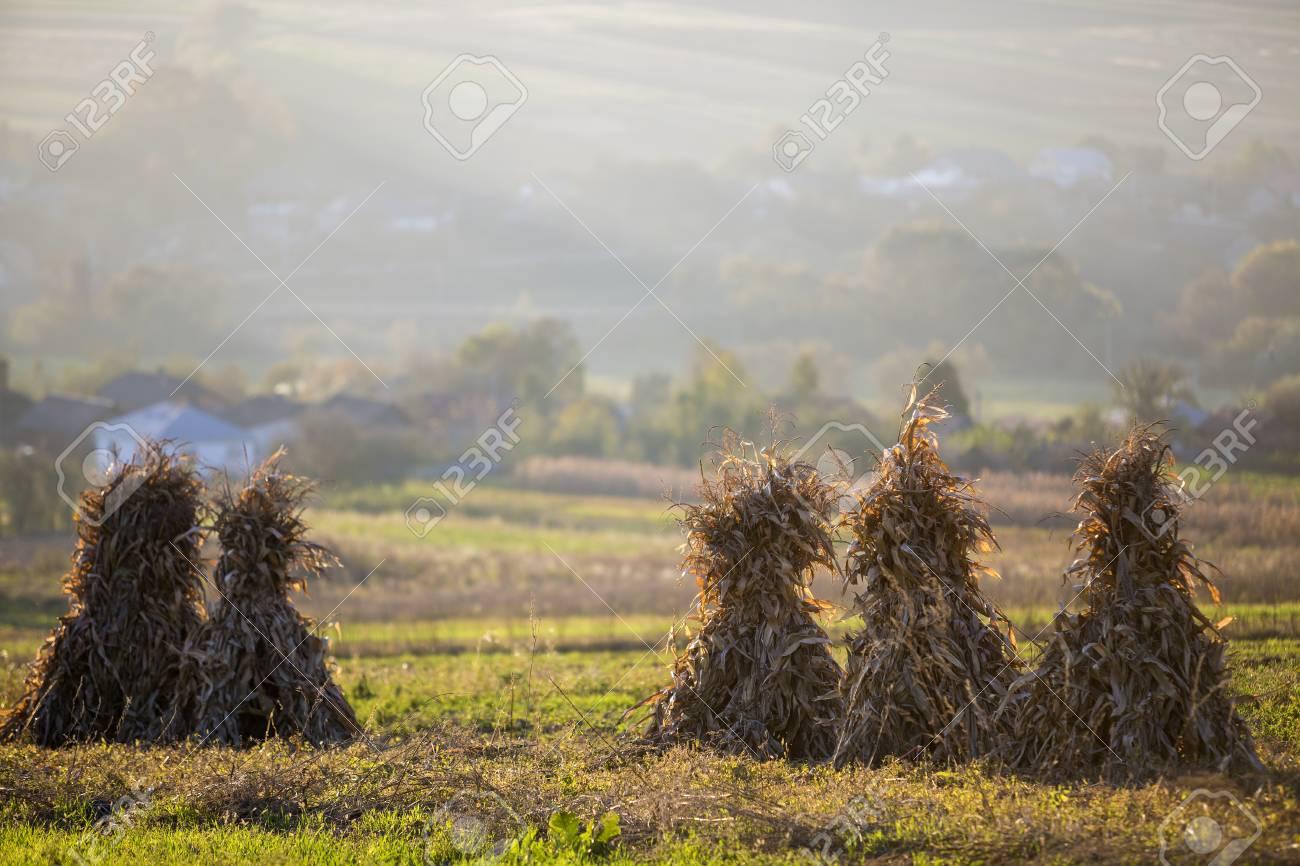 Golden Sheaves