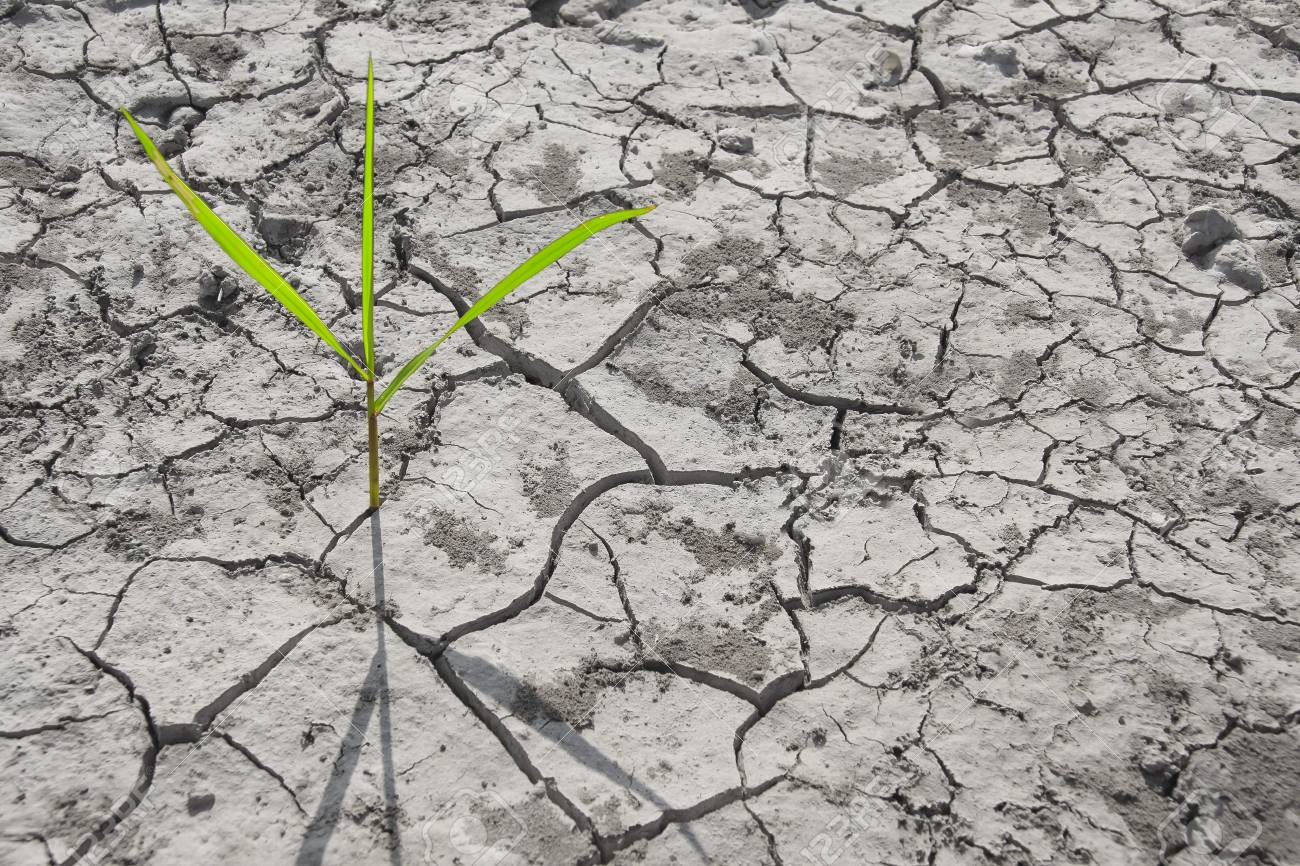 Ground the drought to global warming. - 11891859