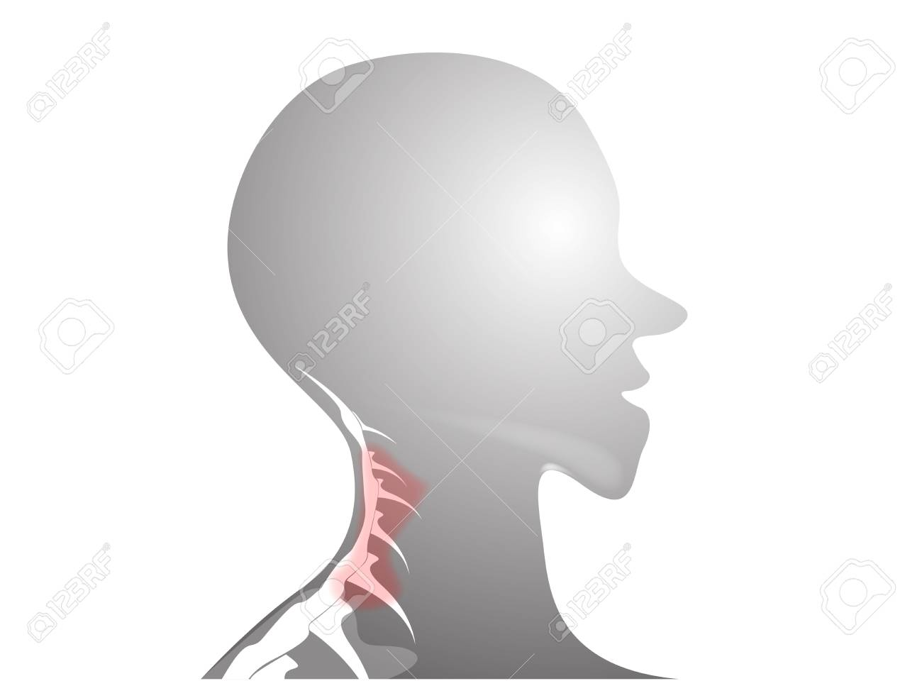 Cervical Spine Anatomy Royalty Free Cliparts Vectors And Stock