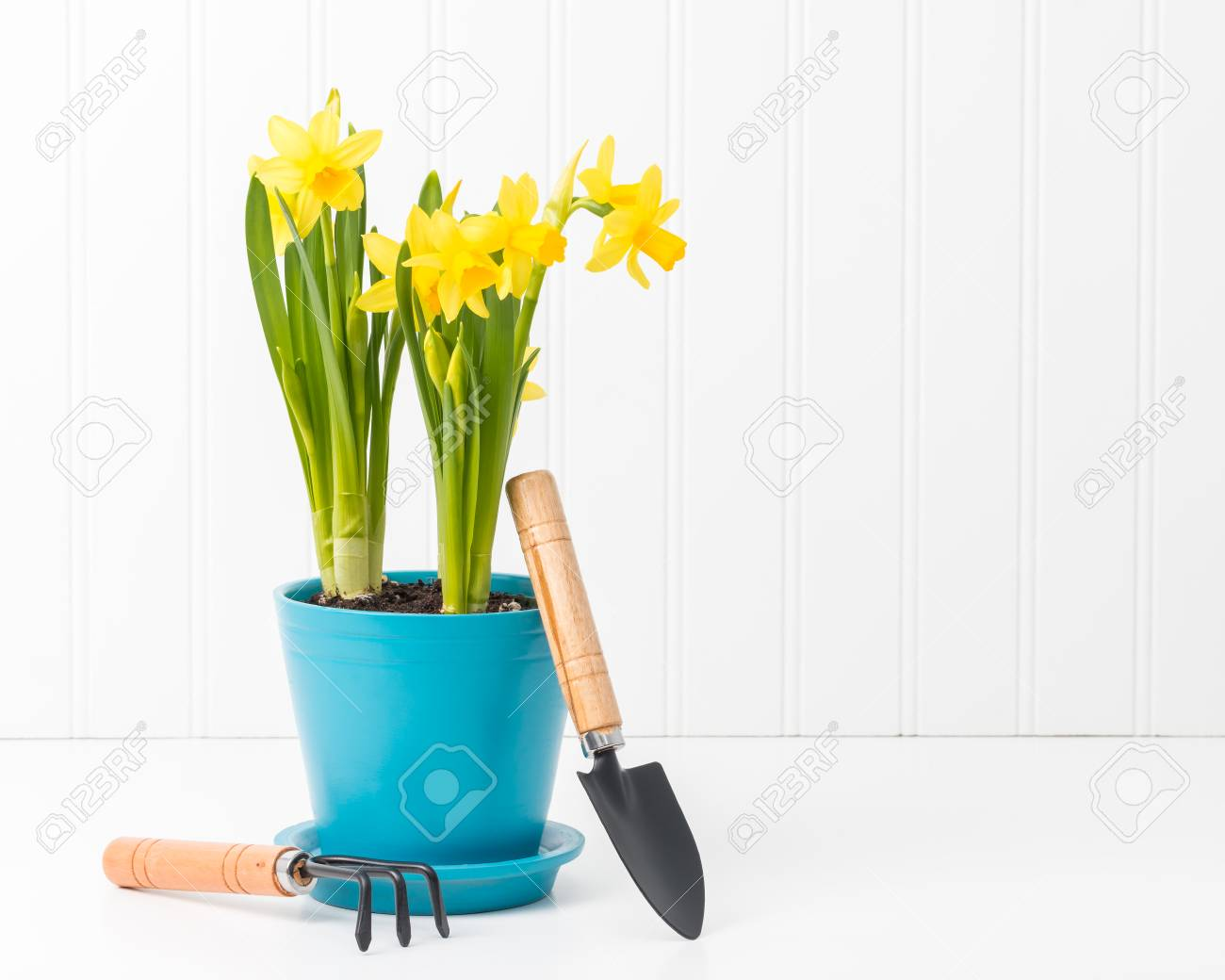 Beautiful Potted Spring Daffodils With Small Garden Tools. Stock Photo    58214101