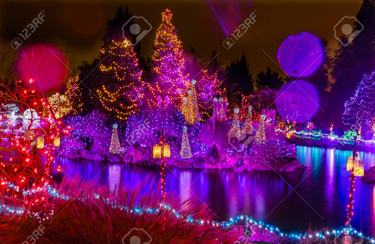 Pink Purple Blue Christmas Trees Lights Reflection Lake Van Dusen Stock Photo Picture And Royalty Free Image Image 117940977