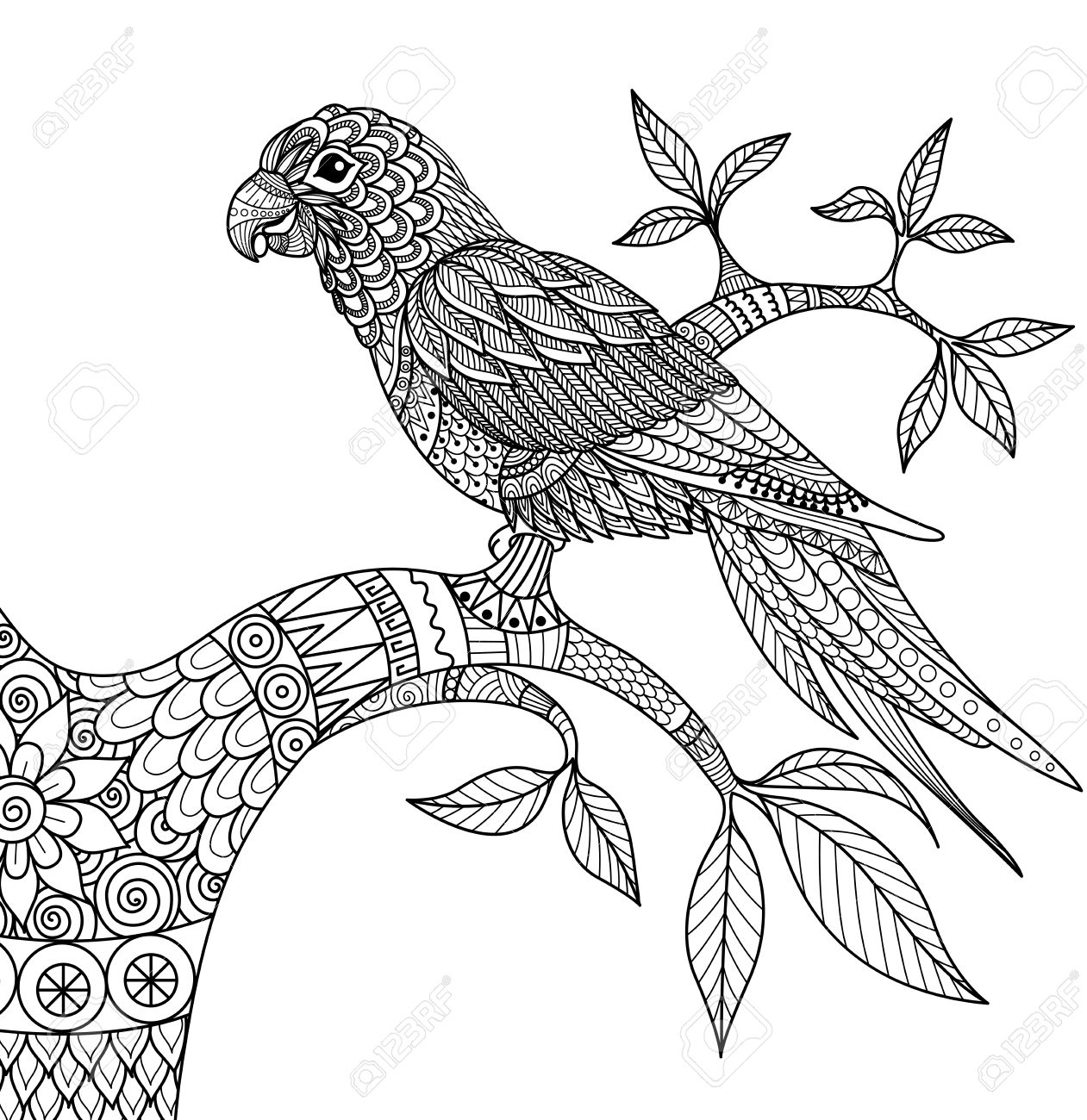 Doodle Design Of Parrot On Branch For Adult Coloring Book Royalty ...