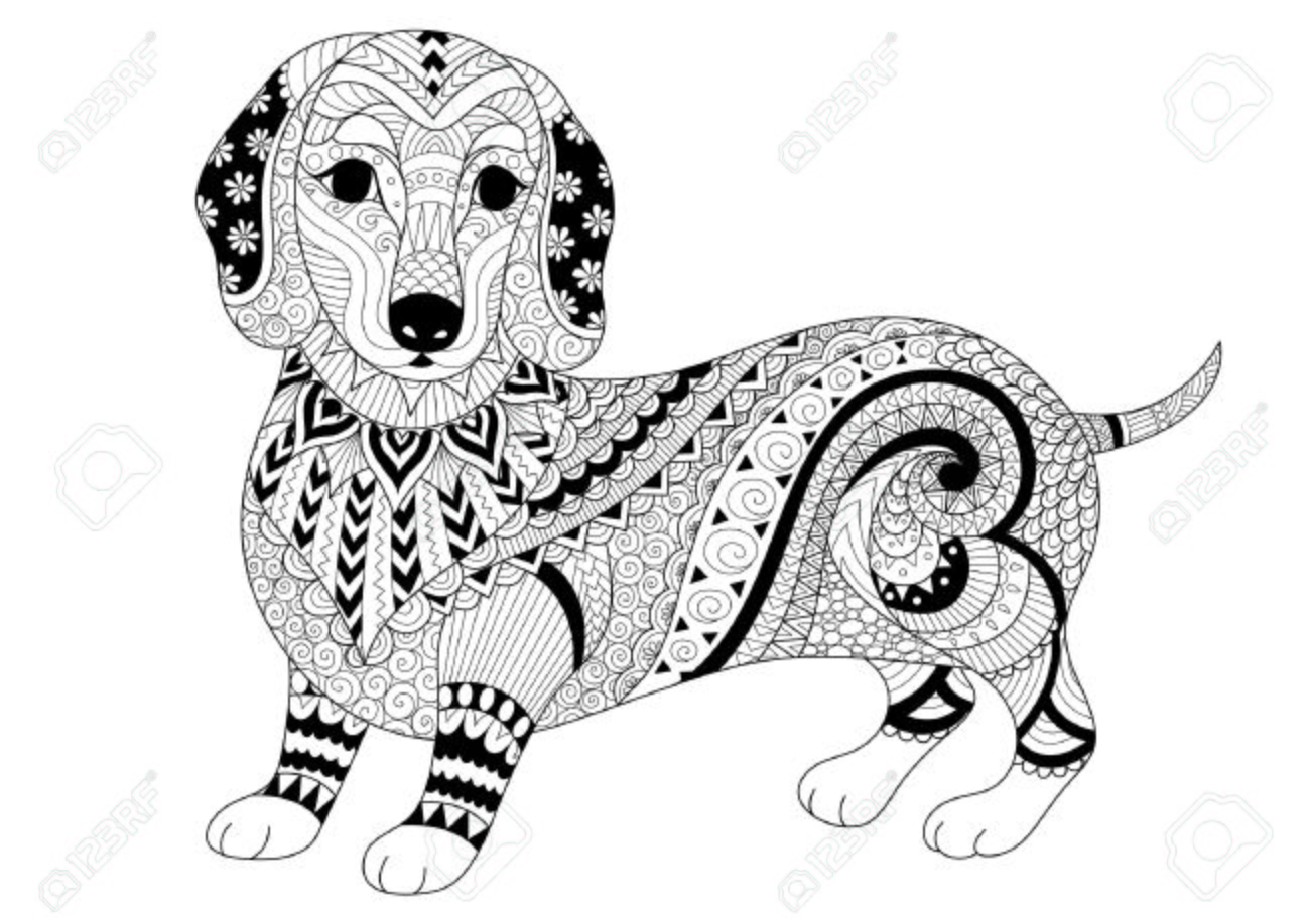Zendoodle Design Of Dachshund Puppy For Adult Coloring Book And T Shirt Stock Vector
