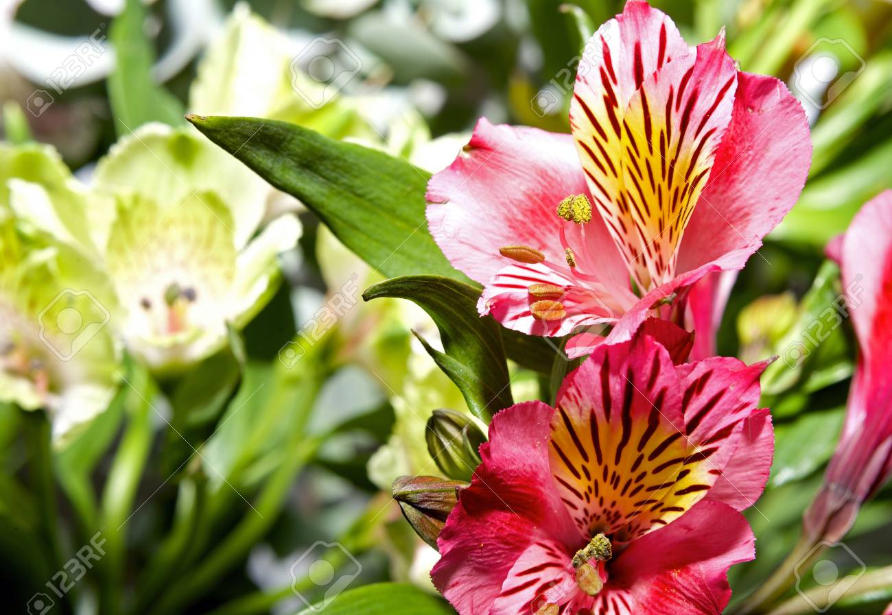 Bouquet of pink lilies and colorful fresh flowers stock photo bouquet of pink lilies and colorful fresh flowers stock photo 18619084 izmirmasajfo