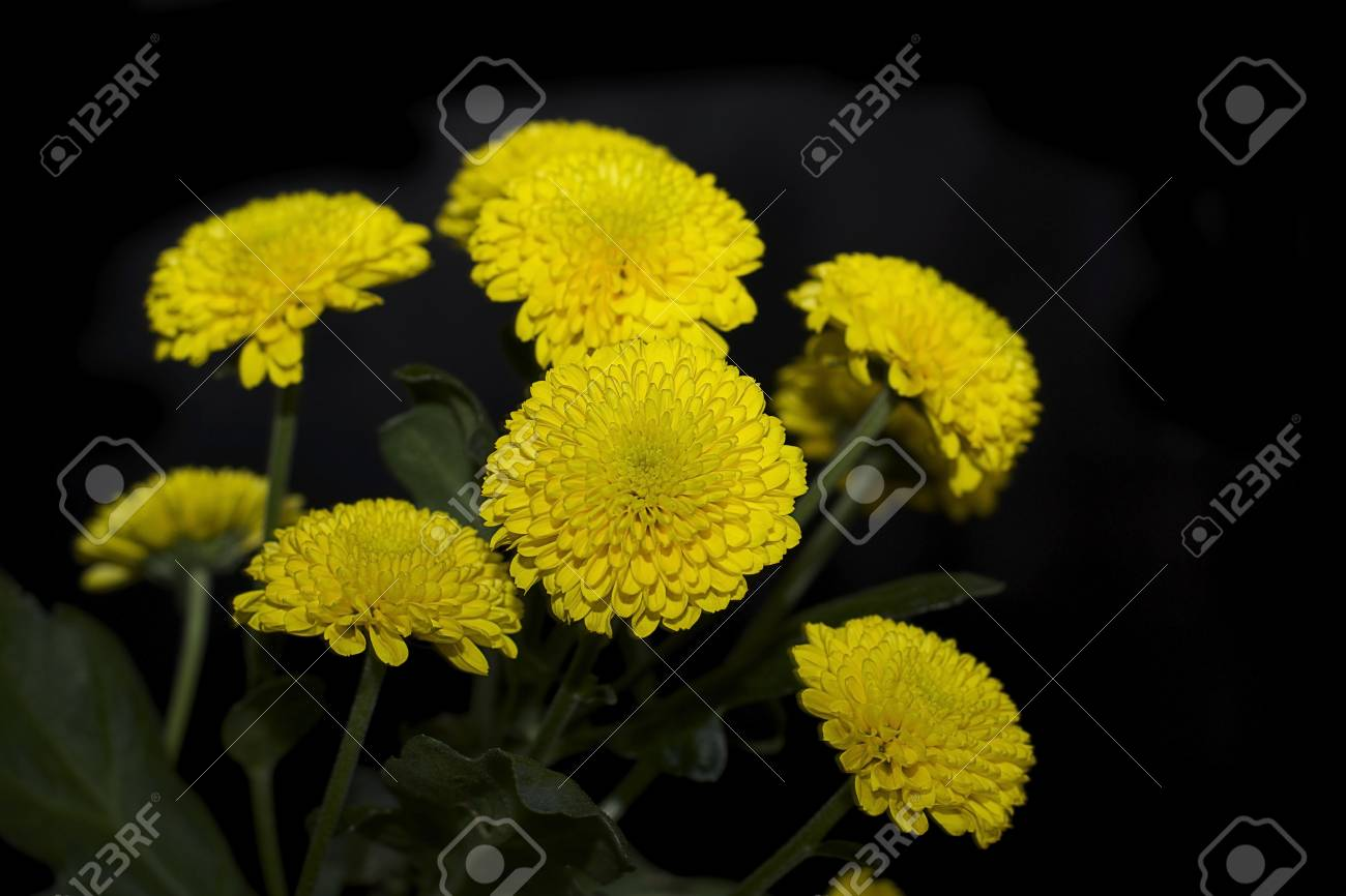 Very Nice Small Yellow Flowers Close Up Stock Photo Picture And